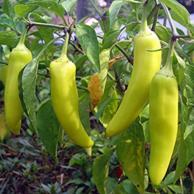 Sweet Banana Pepper Seeds - Non-GMO, Heirloom - Pointed Yellow Banana Peppers - Vegetable Garden Seed by Mountain Valley Seed Co.