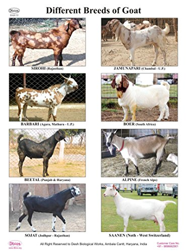 Dbios Digitally Printed Different Breeds Of Goat Laminated Poster Educational Wall Charts