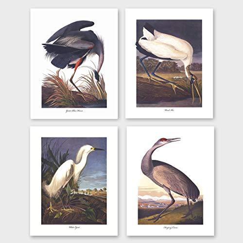 Bird Prints (Audubon Coastal Wall Art, Tropical Home Decor) Set of 4-8x10 Unframed