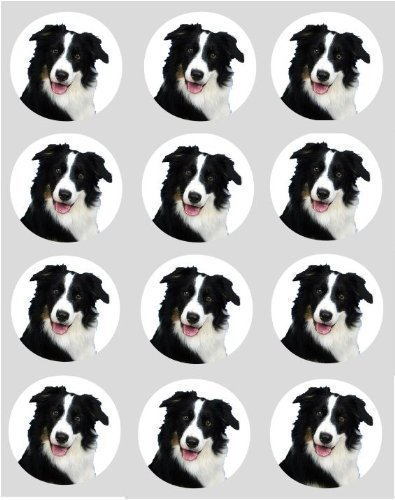 (simply topps 12 Dog Border Collie rice paper fairy/cup cake 40mm toppers pre cut decoration)
