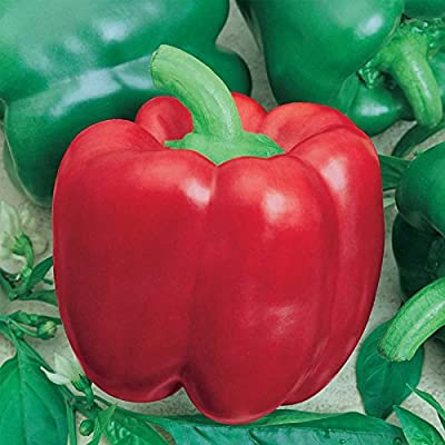 Yolo Wonder L - Sweet Pepper Garden Seeds - Non-GMO, Heirloom - Bell Peppers - Resistant to Tobacco Mosaic Virus - Vegetable Gardening