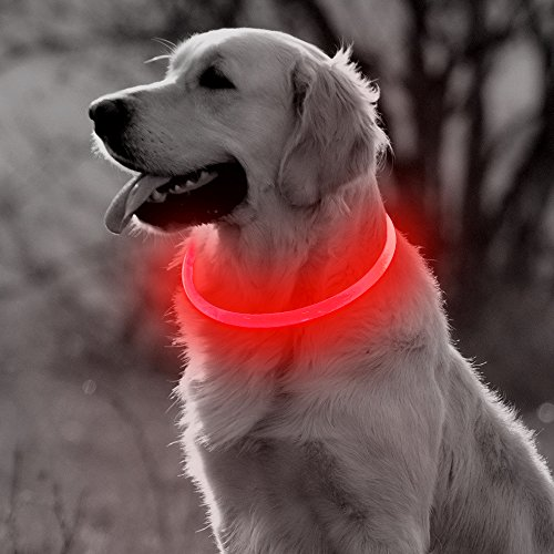 Beautiful light up dog color
