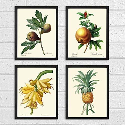 Fig Art - Fruit Print Set of 4 Antique Redoute Beautiful Botanical Tropical Large Banana Pineapple Pomegranate Fig Plants Garden Nature Home Room Decor Wall Art Unframed