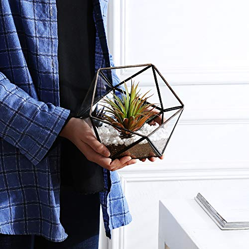 Purzest Gl Terrarium,Gl Geometric Terrarium Tabletop Succulent ... on modern plant box, house tissue box, winter plant box,