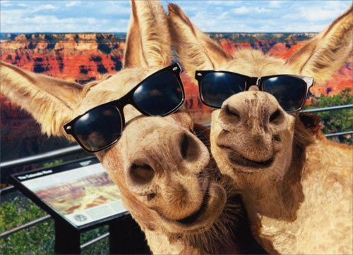 Two Donkeys Funny Birthday Card
