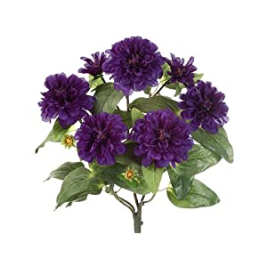 "18"" Zinnia Bush x5 Purple (Pack of 12) 6"