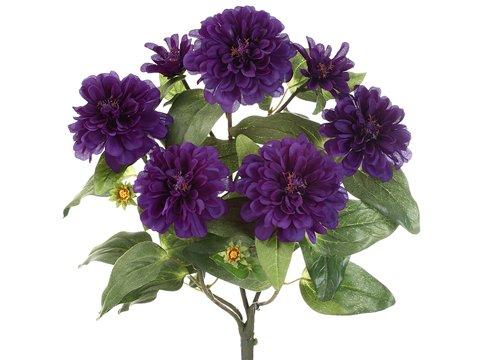18″ Zinnia Bush x5 Purple (Pack of 12)