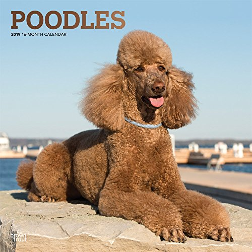 (Poodles 2019 12 x 12 Inch Monthly Square Wall Calendar with Foil Stamped Cover, Animals Dog Breeds (Multilingual Edition) )