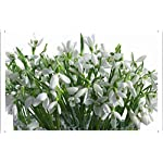 Flower-Tin-Sign-Snowdrops-Flowers-Bouquet-Vase-White-Primrose-Spring-37089-by-Wallers-Decor-78×118