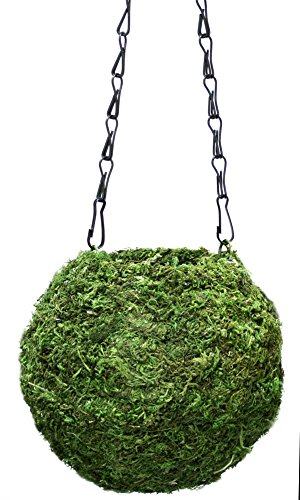 Supermoss 29348) Kokedama Planter, 6in Fresh Green