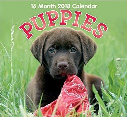 Puppies 16-Month 2018 Calendar