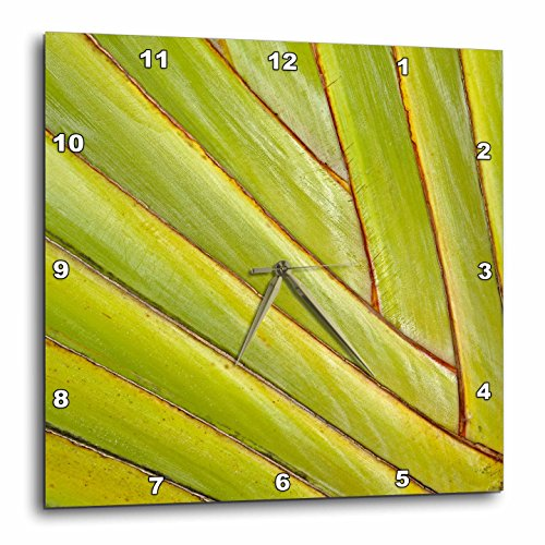 3dRose Pattern In Leaf Stems of Travelers Palm Tree, Fort Myers, Florida, USA - Wall Clock, 10 by 10-Inch - Myers Outlets In Fort