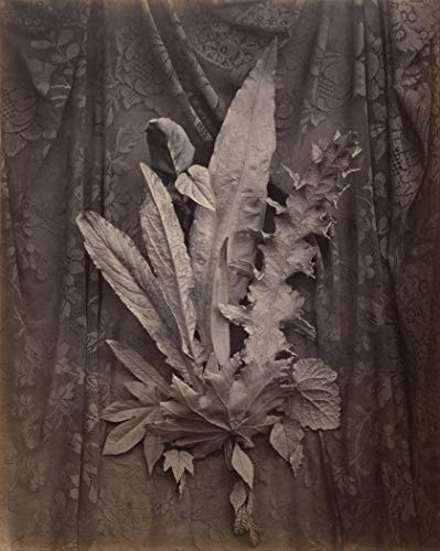 24x30 poster, Charles Aubry (French - An Arrangement of Tobacco Leaves and Grass - Google Art Project (Google Art Project)