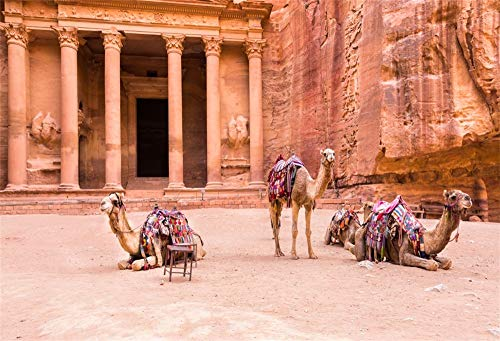 OFILA Camels Near The Temple Backdrop 10x6.5ft Jordan Petra Photos Background Ancient Pillar Architecture Travel Photos Research Events Decor Digital Studio Props