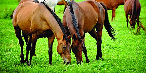 Pacific Southwest Horse Pasture Seed (1/2 Acre) (Best Horse Hay Seed)