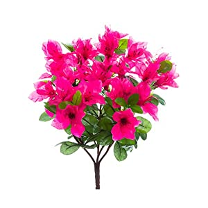"12"" Azalea Bush x7 Beauty (pack of 12) 32"