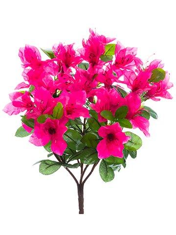 12-Azalea-Bush-x7-Beauty-pack-of-12