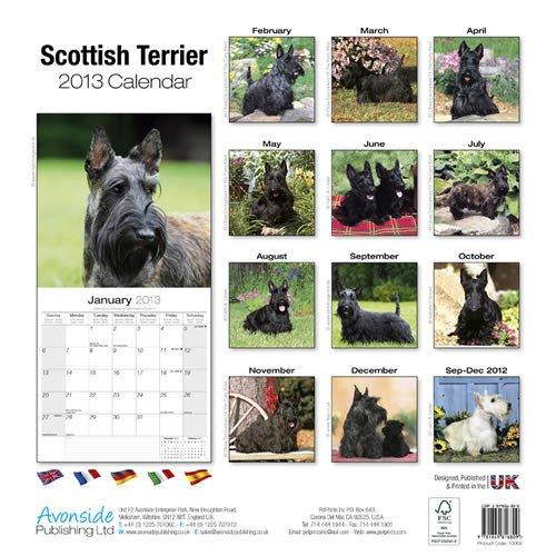 scottish terrier 2013 wall calendar 10069 13 pet prints inc