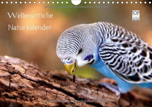 Wellensittiche - Naturkalender (Wandkalender 2014 DIN A4 quer): Naturfotografien von Björn Bergmann (Monatskalender, 14 Seiten)