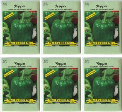 Keystone Peppers Seed (Valley Greene (6 Pack) Heirloom Variety Keystone Resistant Giant Pepper Seeds 200 mg/package Non GE Seeds)
