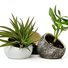Chive - Koski, Small Round Ceramic Air Plant Container, Succulent and Cactus Mini Pot, Tillandsia / Bromeliad Display, Airplant Holder for Indoor Garden and Home Decor, Set of 3 (White, Brown, Black)