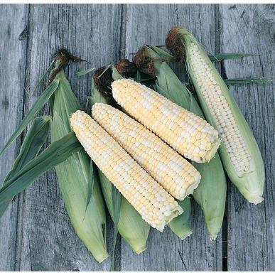 Organic Sweet Corn - David's Garden Seeds Corn Sweet Double Standard SL289 (Multi) 100 Organic Seeds