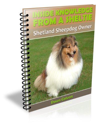 Inside Knowledge From a Sheltie: Shetland Sheepdog Owner