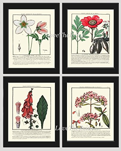 Botanical Print Set of 4 Antique Beautiful Pink White Green Flowers Christmas Rose Black Hellebore Peony Foxglove Soapwort or Sweet WIlliam Garden Plant Green Nature Home Room Decor Wall Art Unframed