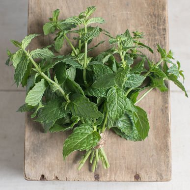 David's Garden Seeds Herb Mint Common SL71235 (Green) 500 Open Pollinated - Fairfield Commons