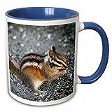 3dRose (mug_157579_6) Eating chipmunk in Yosemite National Park - animal, nature, rodent, wildlife, mammal, wild, squirrel - Two Tone Blue Mug, 11oz