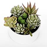 Decorative Round Faux Potted Succulents / Artificial Plant in 6 Inch Glazed ...