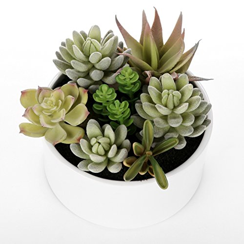 Decorative Round Faux Potted Succulents / Artificial Plant in 6 Inch Glazed White Ceramic Flower (White Artificial Pot)
