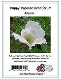 100 White Poppy Seeds. Papaver somniferum 'Album' Poppies. One Stop Poppy Shoppe® Brand.
