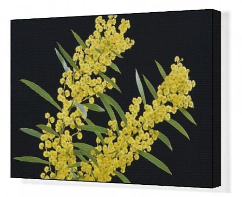 Canvas Artwork of JPF-14091 Golden Wattle - Australia s floral emblem
