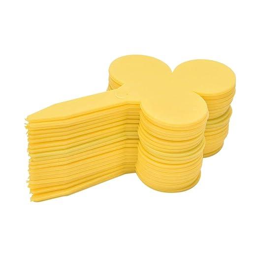 ASTONISH SEEDS: Amarillo: en forma de ciruela 20PCS envÃo de la ...