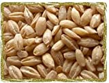 Hulled Barley, Biologically Grown, Non GMO, 10 lbs.