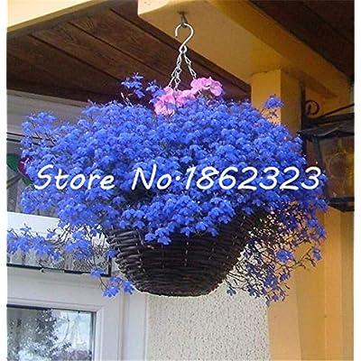 Kasuki 500 pcs Exotic Lobelia Bonsai, Garden Indoor Bonsai Flower Plant, (Blue, Purple. White. Pink) Diaopen Flower Garden Decoration - (Color: 400 pcs): Garden & Outdoor