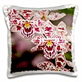 3D Rose Orchids in Hawaii Tropical Botanical Gardens-Us12 Bja0010-Jaynes Gallery Design Pillowcase, 16'' x 16''