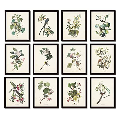 Amazon.com: Audubon Birds Print Set No.25 Set of 12
