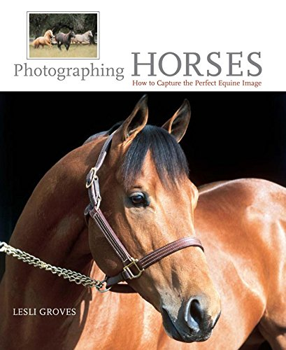Photographing Horses: How To Capture The Perfect