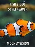 Fish Video Screensaver