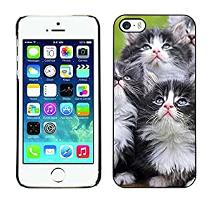 YiPhone /// Prima de resorte delgada de la cubierta del caso de Shell Armor - Kittens Munchkin Cat Pet Feline - Apple iPhone 5 / 5S
