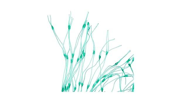 Malla anti pajaros para jardin, huerto urbano, estanque..: Amazon ...