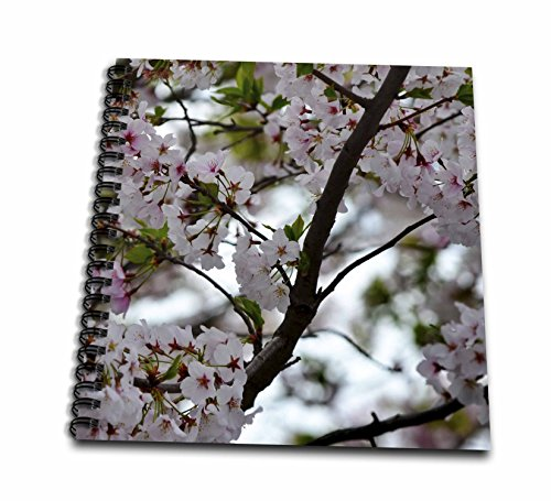 cherry blossom drawing book - 5