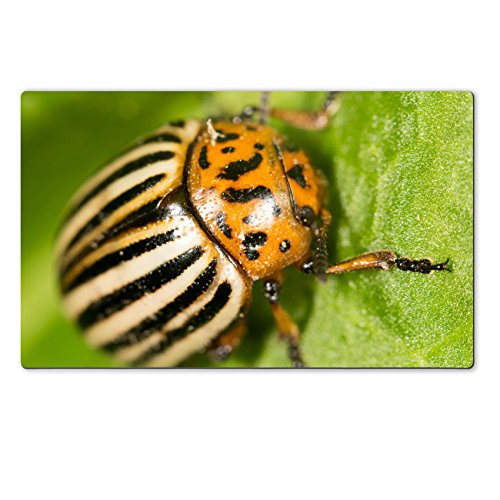 luxlady-natural-rubber-large-table-mat-id-39777597-colorado-potato-beetle-on-a-green-leaf