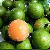 10pcs Lemon Sweet Seeds Spanish Lime Tree Green Skin Orange Juicy Fruits Garden