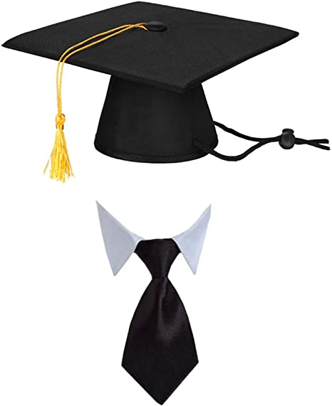 Graduation Dog Collars