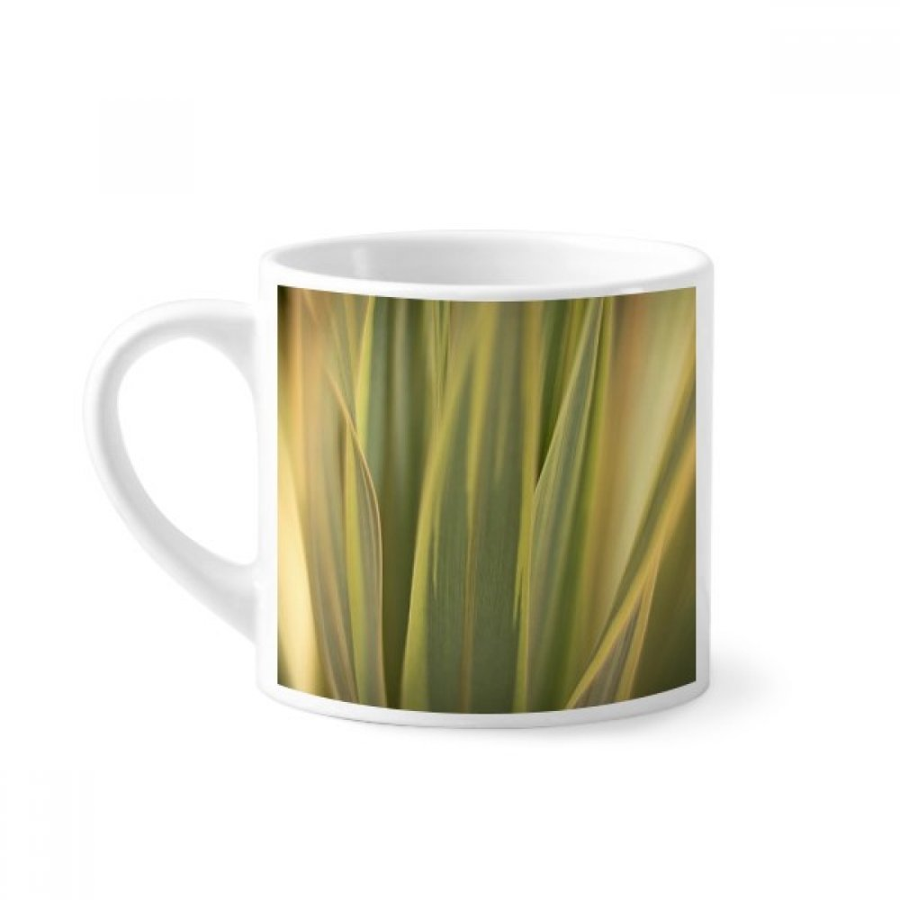 Diythinker Plant Leaves Nature Picture Photo Mini Coffee Mug White Pottery Ceramic Cup With Handle 6oz Gift Amazon In Home Kitchen