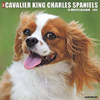 Just Cavalier King Charles Spaniels 2019 Calendar