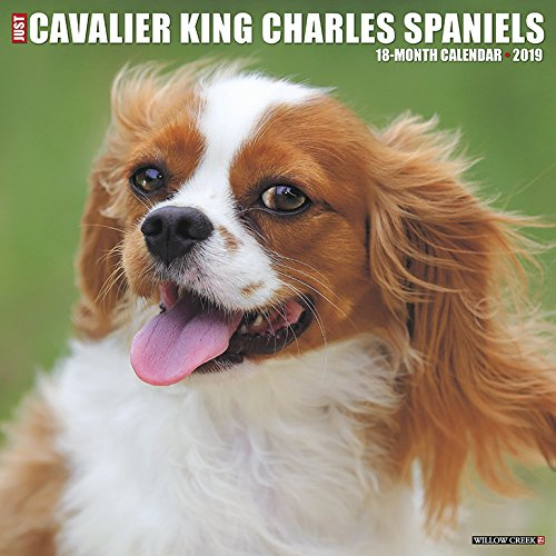 Just Cavalier King Charles Spaniels 2019 Wall Calendar (Dog Breed Calendar)